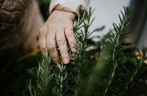 bylinky pro větší potenci a plodnost