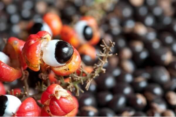 Ovoce a kořen guarany